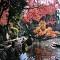 Top 10 địa điểm tuyệt vời vào mùa thu ở Nhật