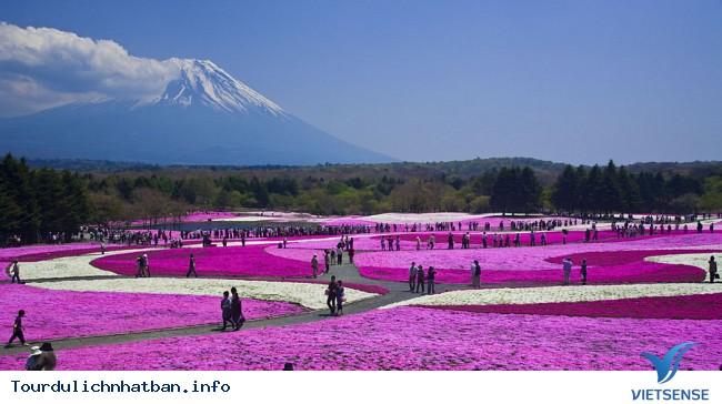 Nhật bản không chỉ có hoa Anh Đào - Ảnh 3