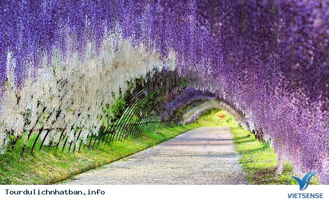 Nhật bản không chỉ có hoa Anh Đào - Ảnh 2