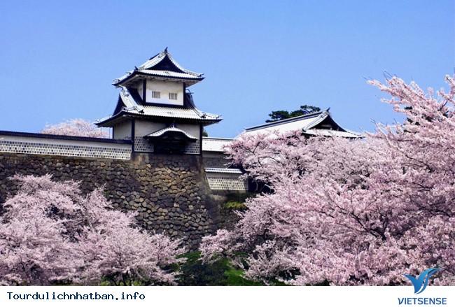 Nhật bản không chỉ có hoa Anh Đào - Ảnh 4