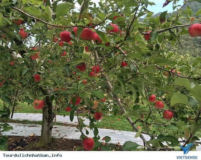 Đắm chìm trong vẻ đẹp cuốn hút của vườn táo Okukuji tại Nhật Bản - Ảnh 1
