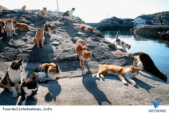Khám phá vẻ đẹp 5 hòn đảo vô cùng thú vị tại đất nước Nhật Bản - Ảnh 5