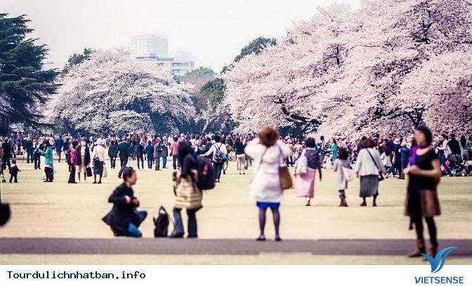 Nên thưởng thức hoa anh đào tại địa danh nào ở Nhật Bản? - Ảnh 4