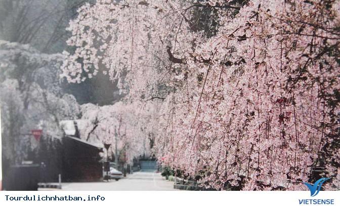 Nên thưởng thức hoa anh đào tại địa danh nào ở Nhật Bản? - Ảnh 3