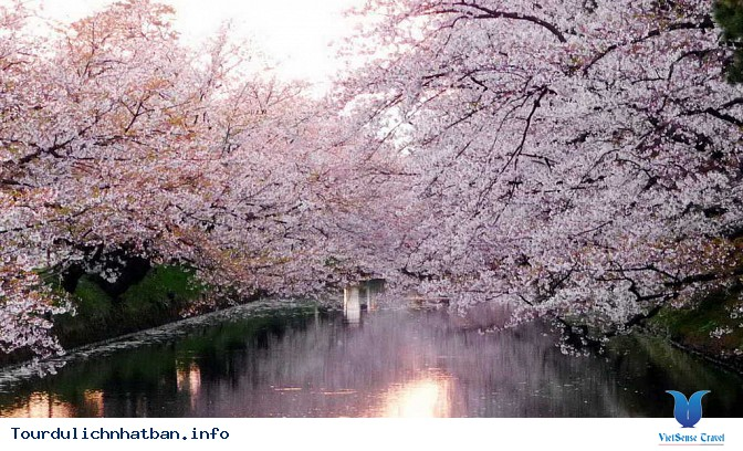 Nên thưởng thức hoa anh đào tại địa danh nào ở Nhật Bản? - Ảnh 2
