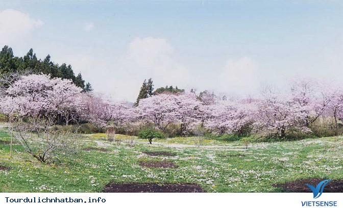 Nên thưởng thức hoa anh đào tại địa danh nào ở Nhật Bản? - Ảnh 1