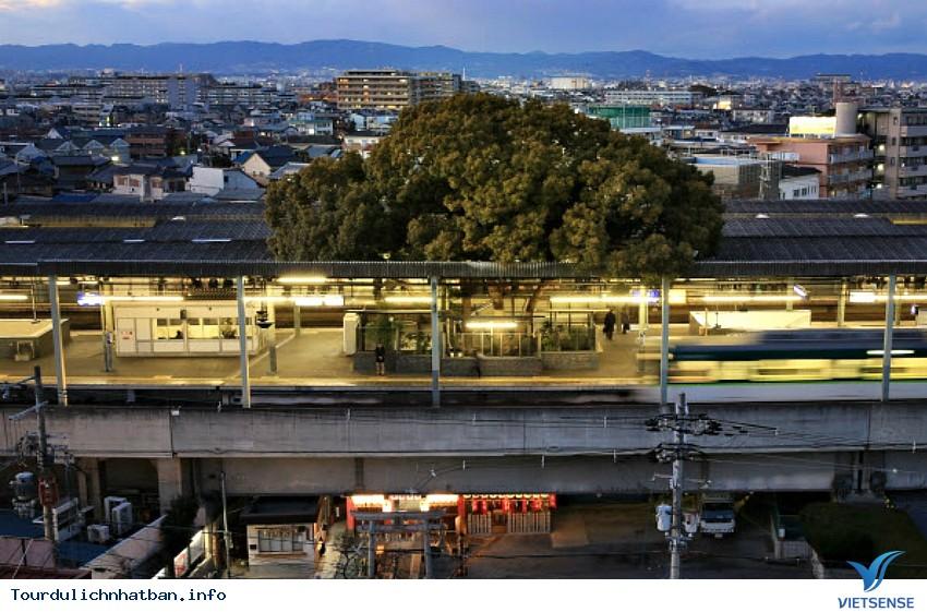 Huyền bí xung quanh cây đại thụ 700 năm tuổi ở Nhật Bản - Ảnh 2