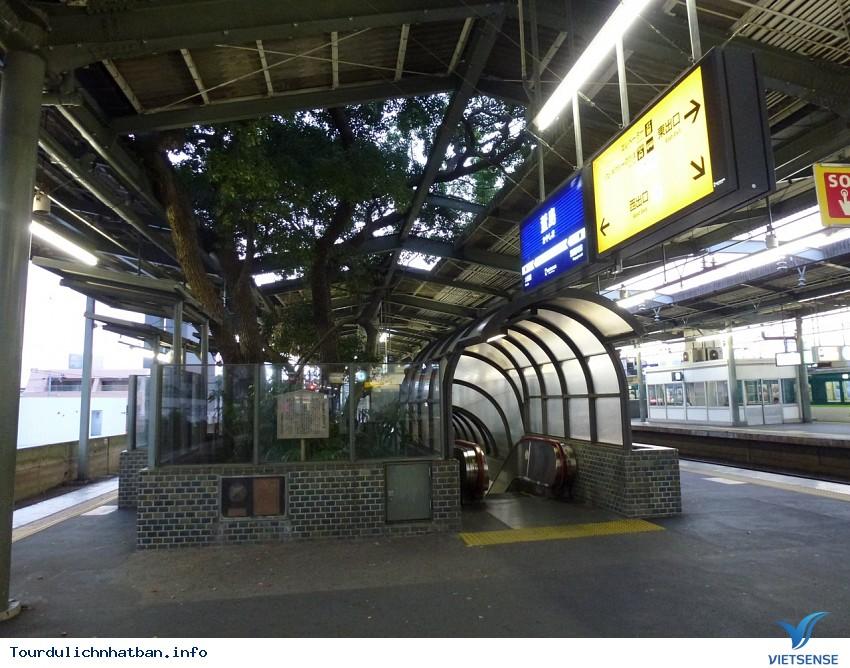 Huyền bí xung quanh cây đại thụ 700 năm tuổi ở Nhật Bản - Ảnh 1