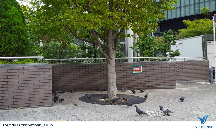 Ngắm khung cảnh bình yên vào buổi sáng của các thành phố lớn của Nhật Bản - Ảnh 3