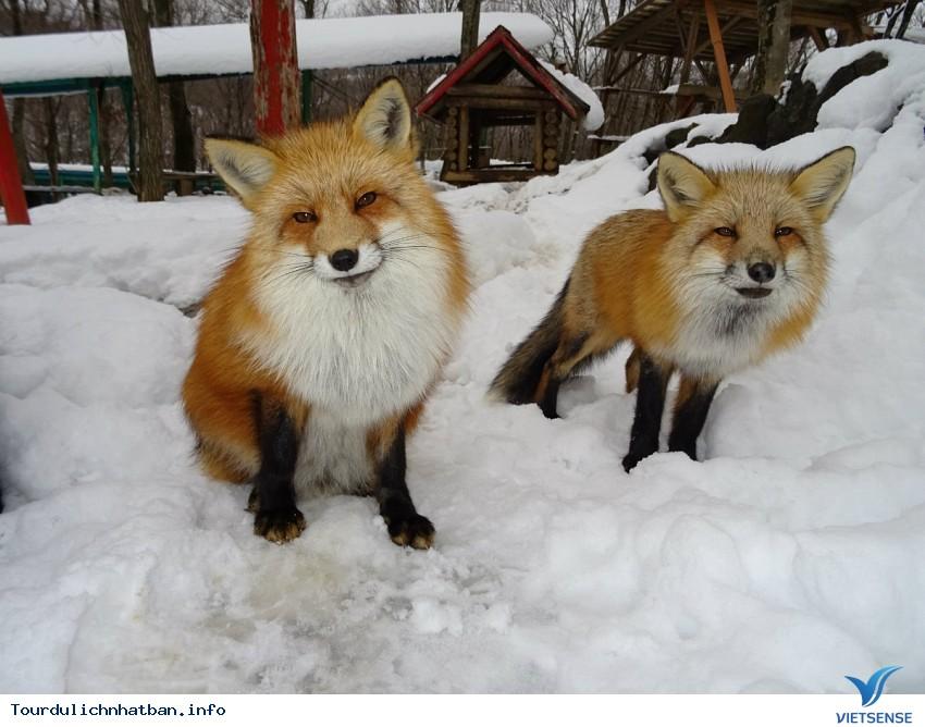Ngôi làng cáo ở Nhật Bản - Ảnh 1