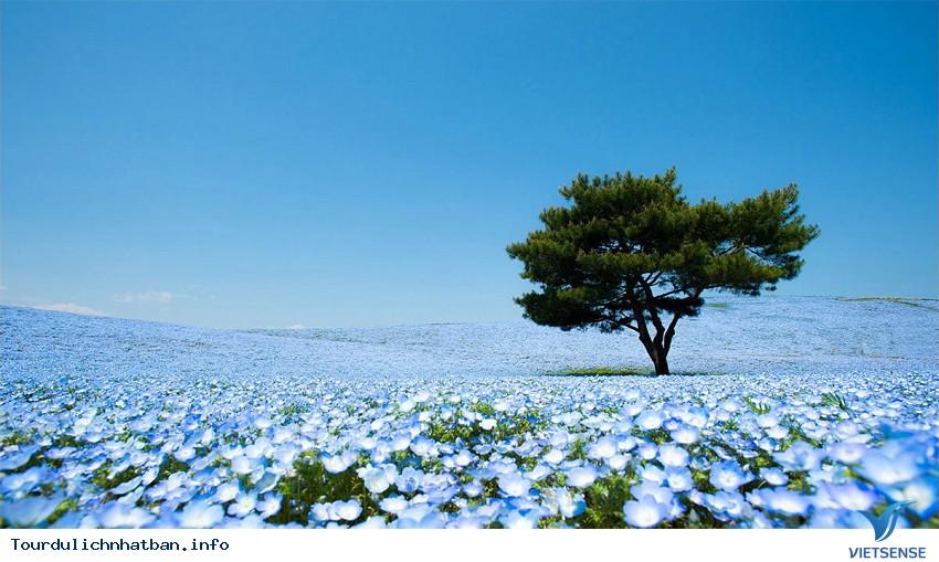 Ở Nhật Bản có một nơi chơi được suốt 4 mùa - Ảnh 1