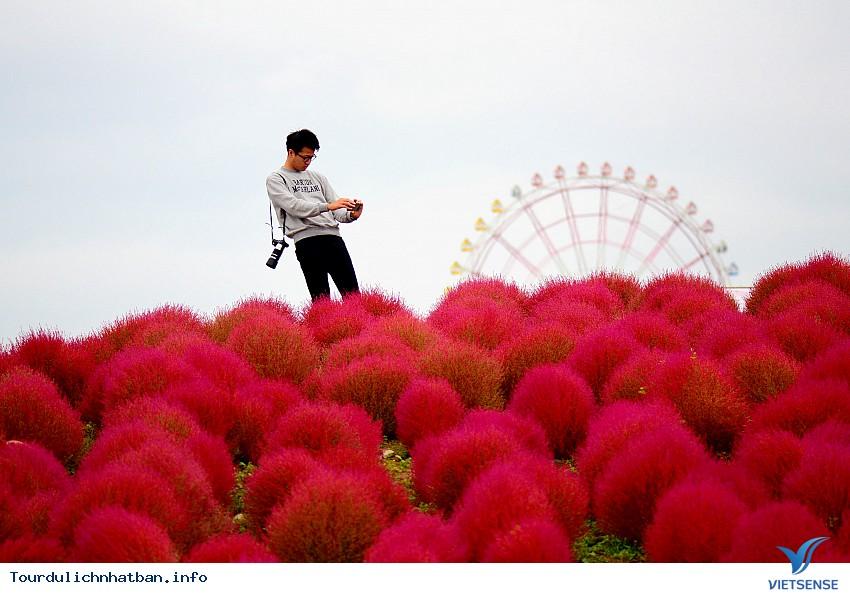 Tới Nhật Bản ghé thăm thiên đường hoa đẹp mê hồn - Ảnh 2