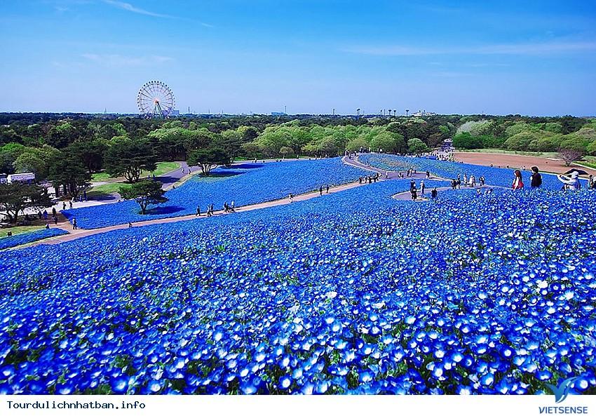 Tới Nhật Bản ghé thăm thiên đường hoa đẹp mê hồn - Ảnh 1
