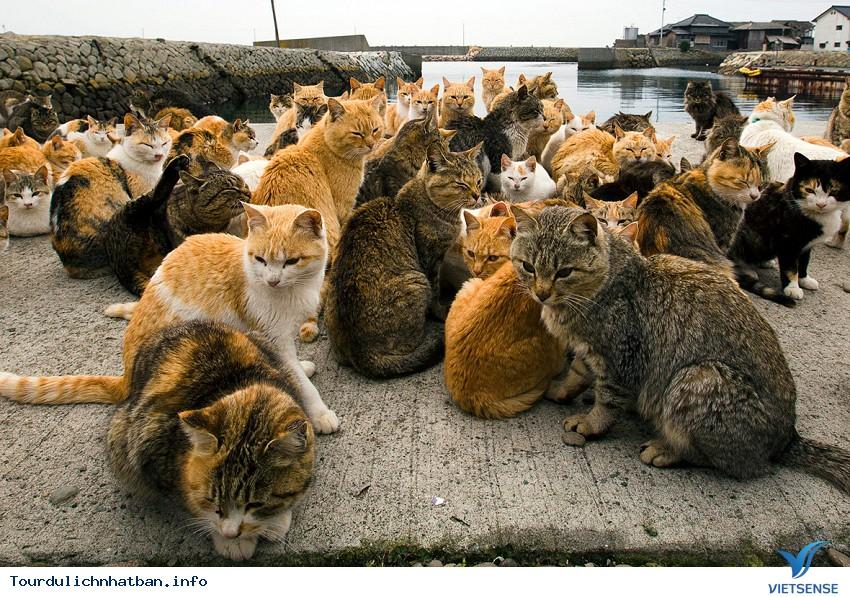 Yêu mèo hãy đến những nơi này ở Nhật Bản - Ảnh 1