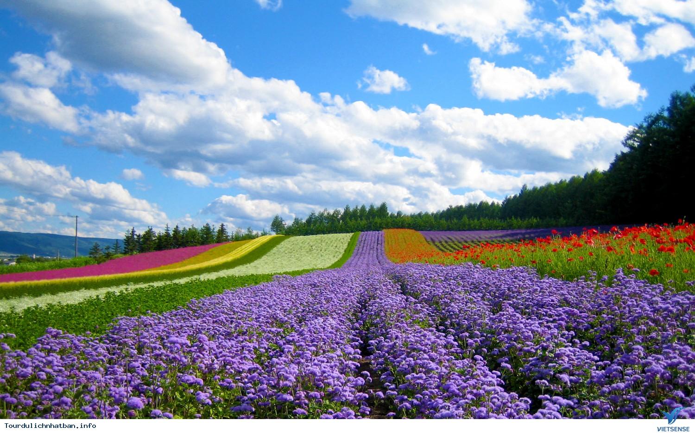 Đảo Hokkaido Nhật Bản, Dao Hokkaido Nhat Ban