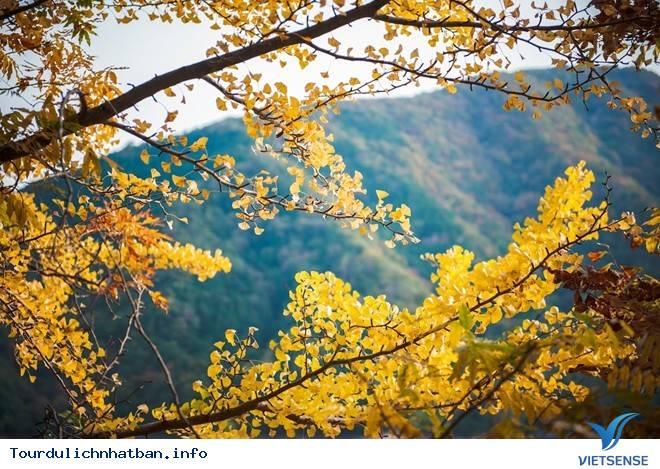 """Đến Okutama Nhật Bản - Ngắm Rừng Cây Lá Đỏ Tại """"Lá Phổi Của Tokyo"""",den okutama nhat ban  ngam rung cay la do tai quot;la phoi cua tokyoquot;"""