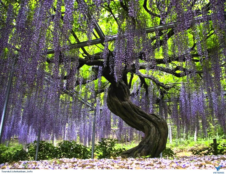 Du lịch Nhật Bản du khách đừng bỏ lỡ những điểm đến tuyệt đẹp này - Ảnh 1