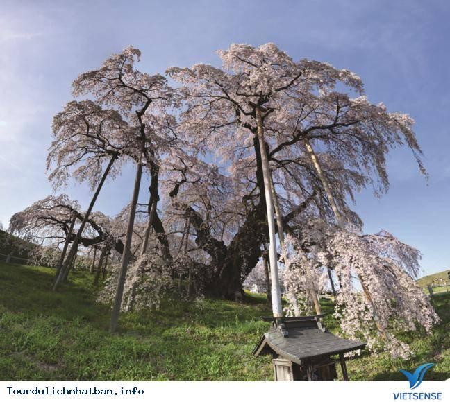 Fukushima - tuyết rơi trắng trời sau mùa lá đỏ Nhật Bản - Ảnh 1