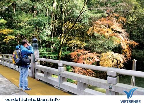 Momiji - Mùa lá đỏ xứ Phù Tang - Ảnh 4