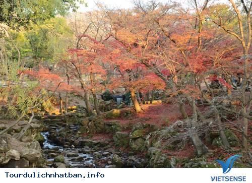 Momiji - Mùa lá đỏ xứ Phù Tang - Ảnh 3