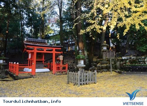 Momiji - Mùa lá đỏ xứ Phù Tang - Ảnh 2