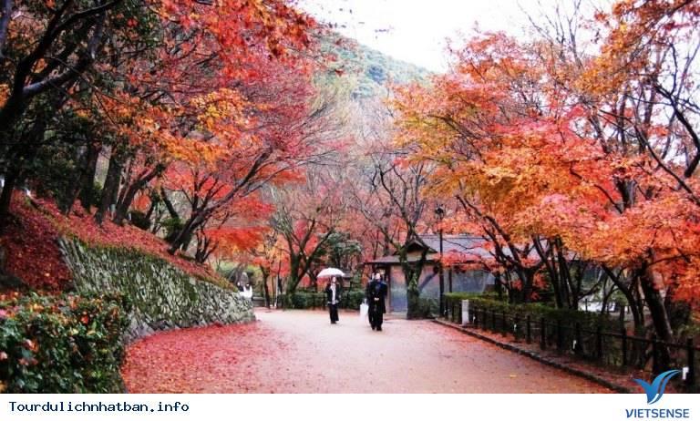 Nara - Nét duyên thầm trong lòng Nhật Bản - Ảnh 3