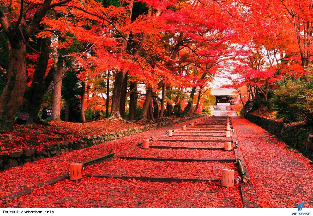 Nên Đi Đu Lịch Nhật Bản Vào Thời Điểm Nào Là Đẹp Nhất? - Ảnh 5
