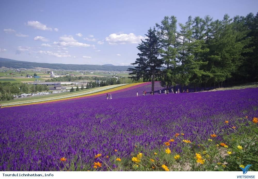 Những cánh đồng hoa bạt ngàn đa màu sắc ở Hokkaido Nhật Bản - Ảnh 2