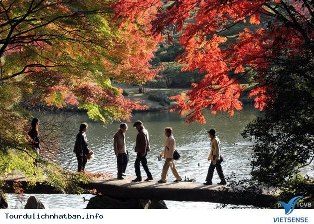 Những địa điểm ngắm lá đỏ tuyệt vời khi đi du lịch Nhật Bản - Ảnh 3