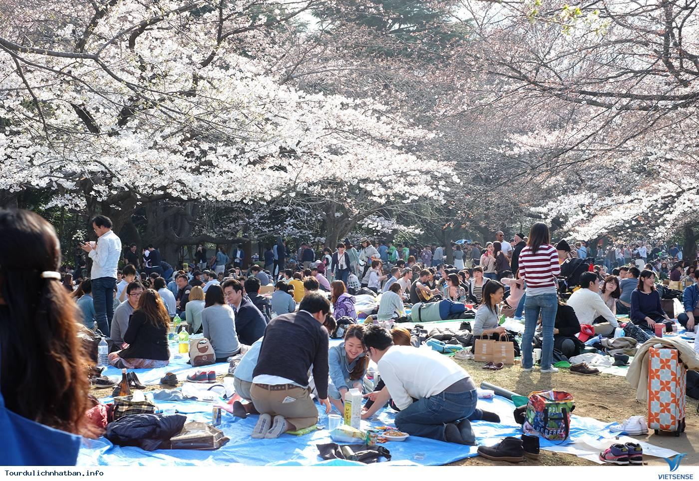 Những Lưu ý Khi Ngắm Hoa Anh Đào Ở Nhật Bản - Ảnh 3