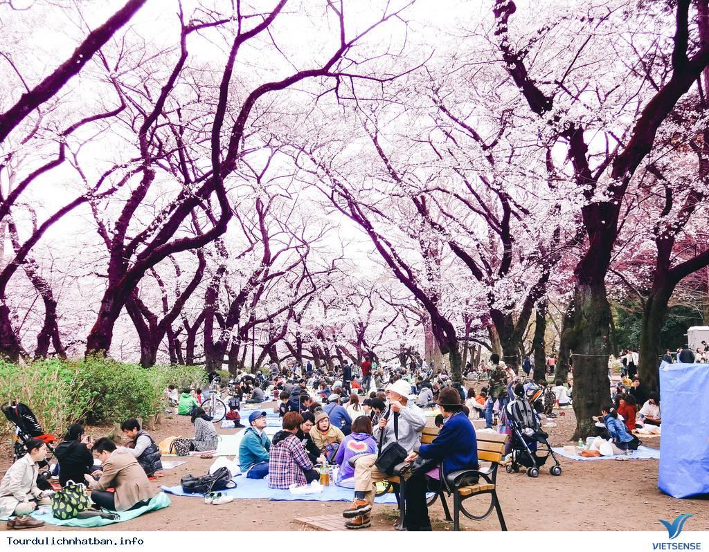 Những Lưu ý Khi Ngắm Hoa Anh Đào Ở Nhật Bản - Ảnh 1