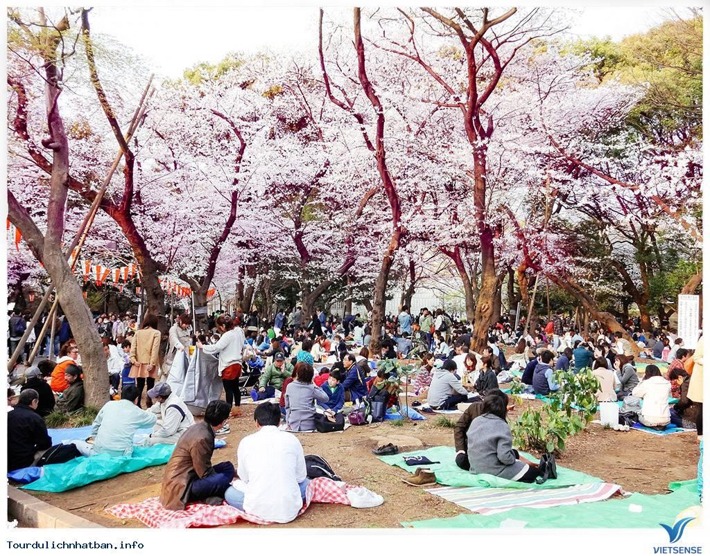 Những Lưu ý Khi Ngắm Hoa Anh Đào Ở Nhật Bản - Ảnh 5