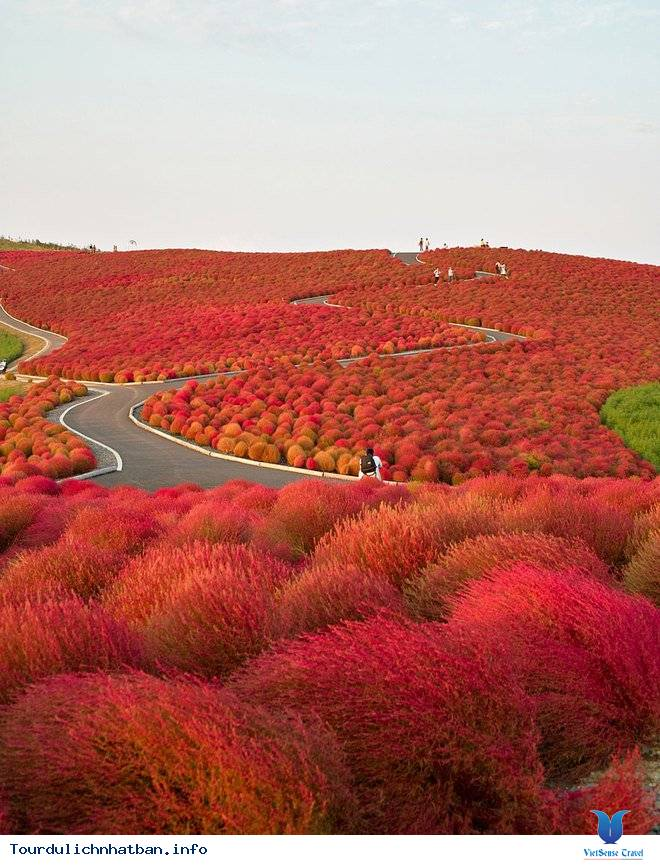 Những lý do khách du lịch luôn quay lại Nhật - Ảnh 4