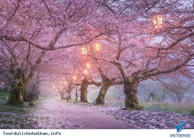 Những lý do khách du lịch luôn quay lại Nhật - Ảnh 12