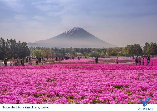 Những lý do khách du lịch luôn quay lại Nhật - Ảnh 5