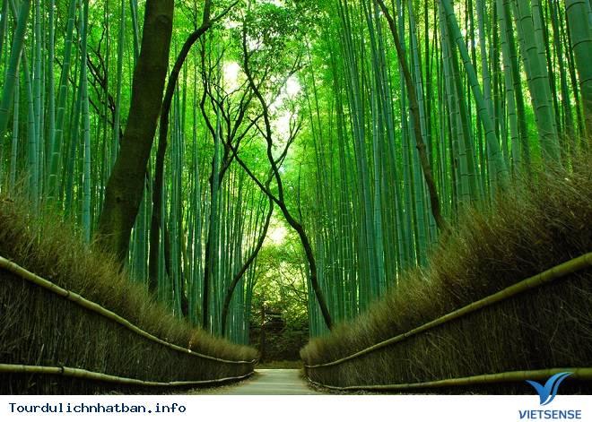 Những những địa điểm du lịch ai cũng thích mê khi tới với Nhật Bản - Ảnh 3