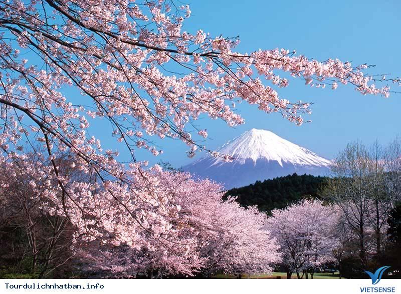 Núi Phú Sĩ- Linh Hồn Của Nhật Bản - Ảnh 2