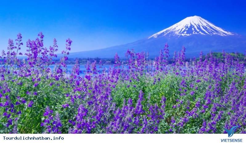 Núi Phú Sĩ- Linh Hồn Của Nhật Bản - Ảnh 3