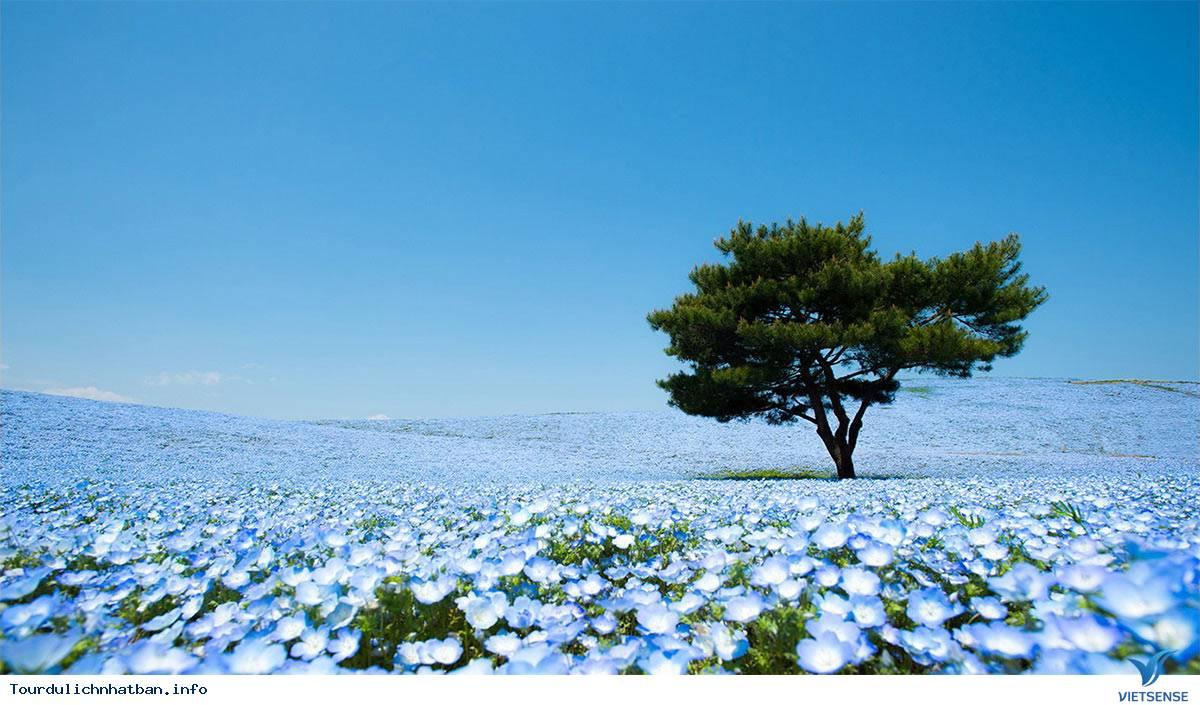 Ở Nhật Bản có một nơi chơi được suốt 4 mùa