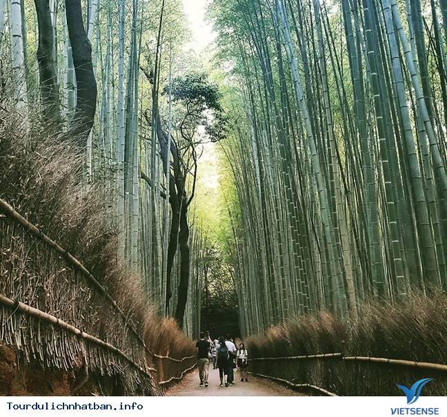 Review hành trình du lịch Nhật trong 9 ngày - Ảnh 4