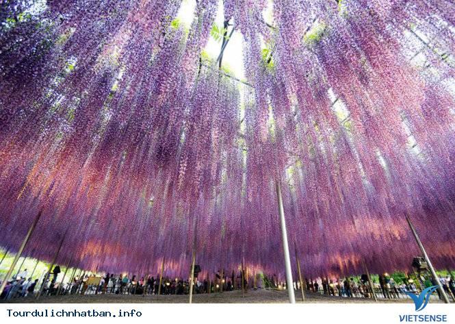 Rợp trời mùa hoa Fuji tháng 5 tại Nhật Bản,rop troi mua hoa fuji thang 5 tai nhat ban