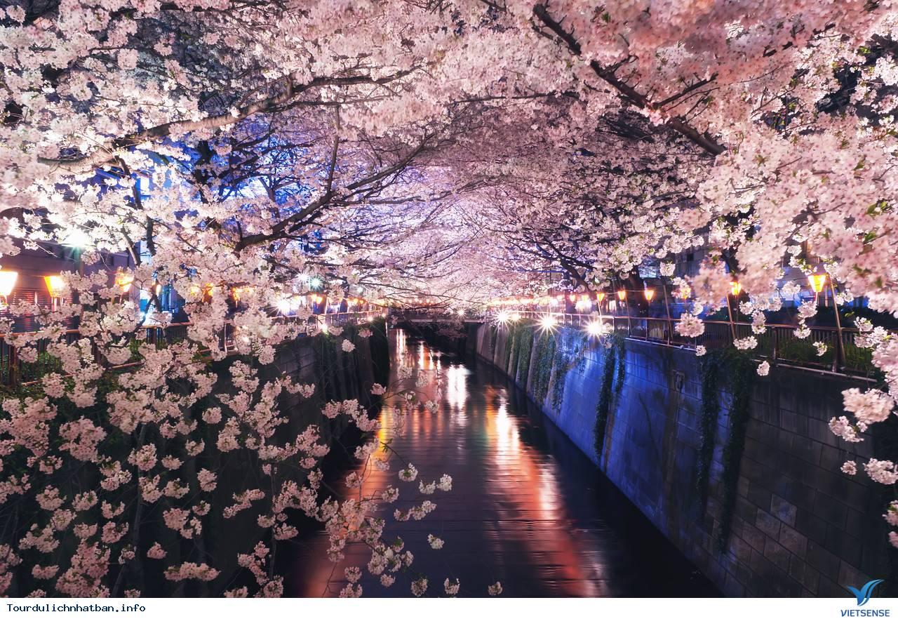 Tới đâu ngắm hoa anh đào Nhật Bản là lý tưởng nhất - Phần 2 - Ảnh 2