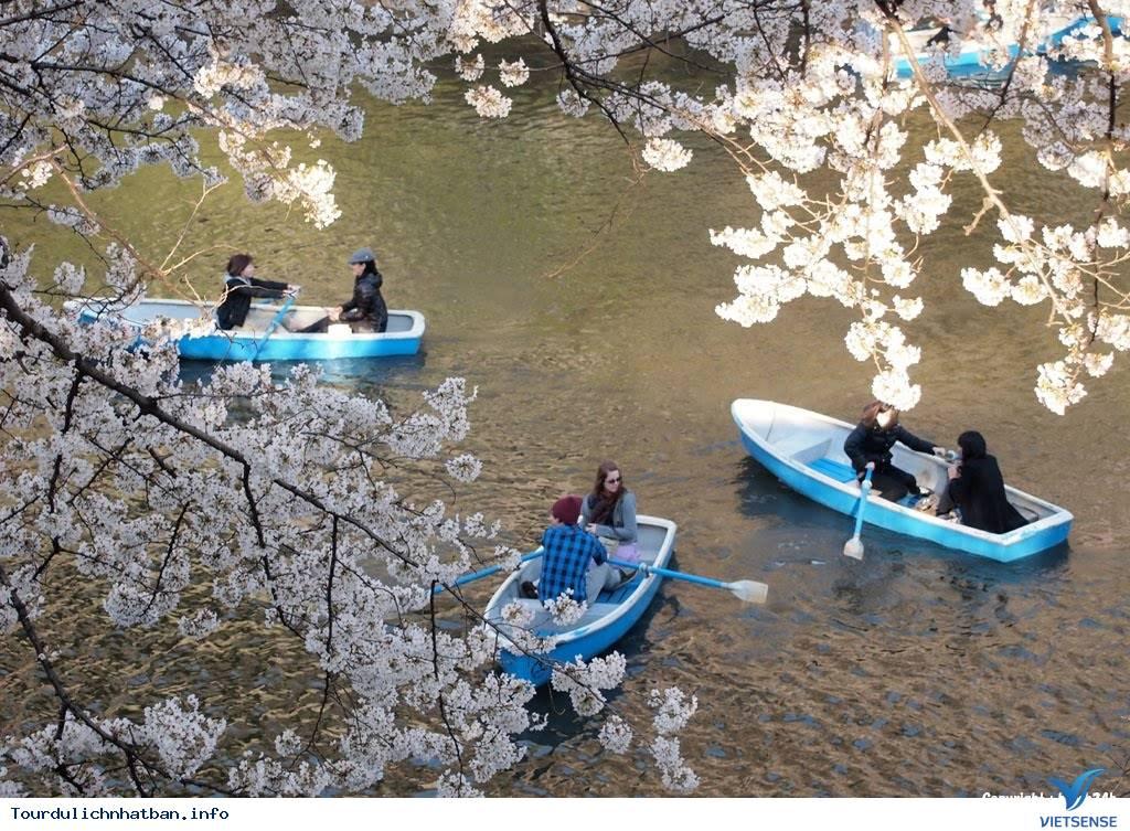 Tới đâu ngắm hoa anh đào Nhật Bản là lý tưởng nhất - Phần 2 - Ảnh 4