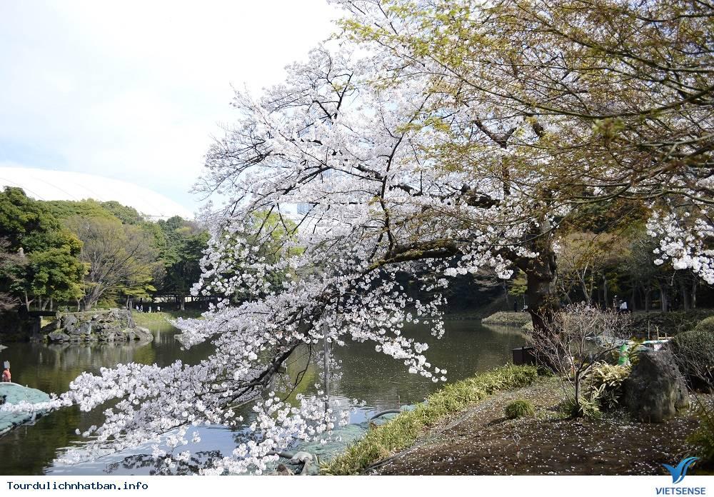 Tới đâu ngắm hoa anh đào Nhật Bản là lý tưởng nhất - Phần 2 - Ảnh 3