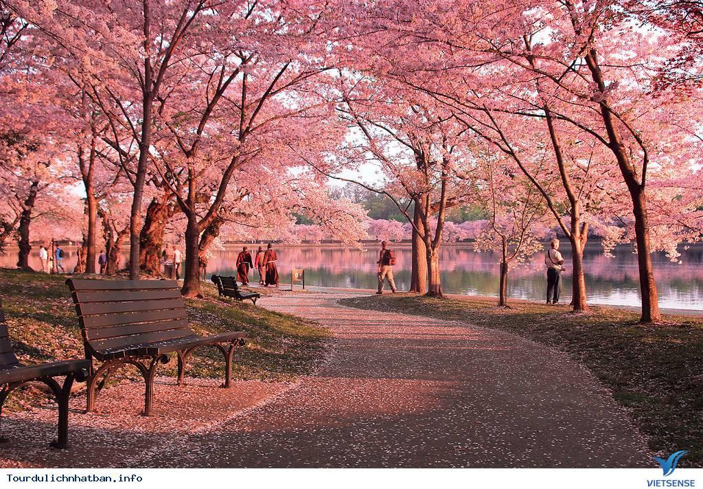 Top địa điểm thưởng thức hoa anh đào tại Nhật Bản lý tưởng - Ảnh 4
