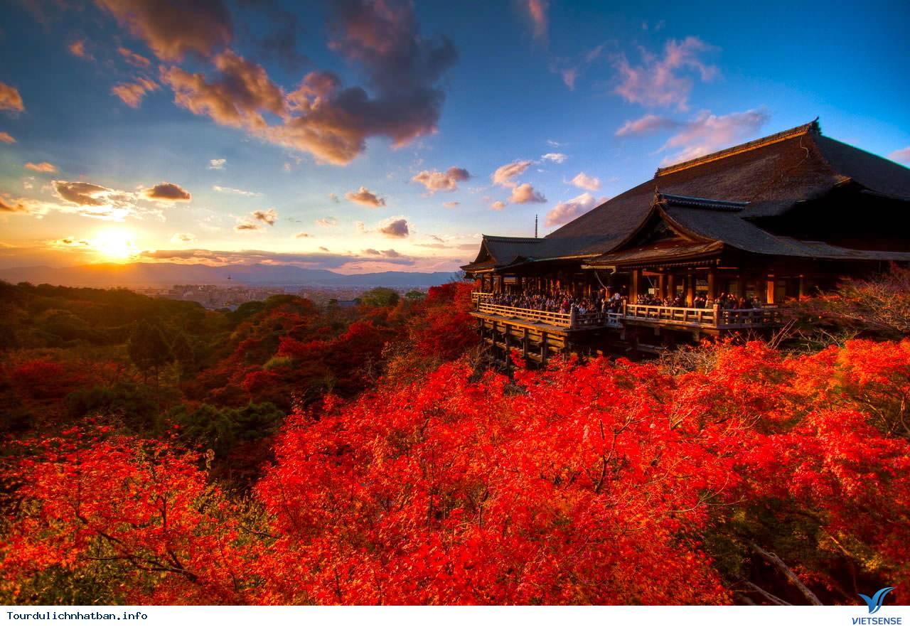 Tour Du Lịch Nhật Bản - Mùa lá đỏ 4 ngày 3 đêm