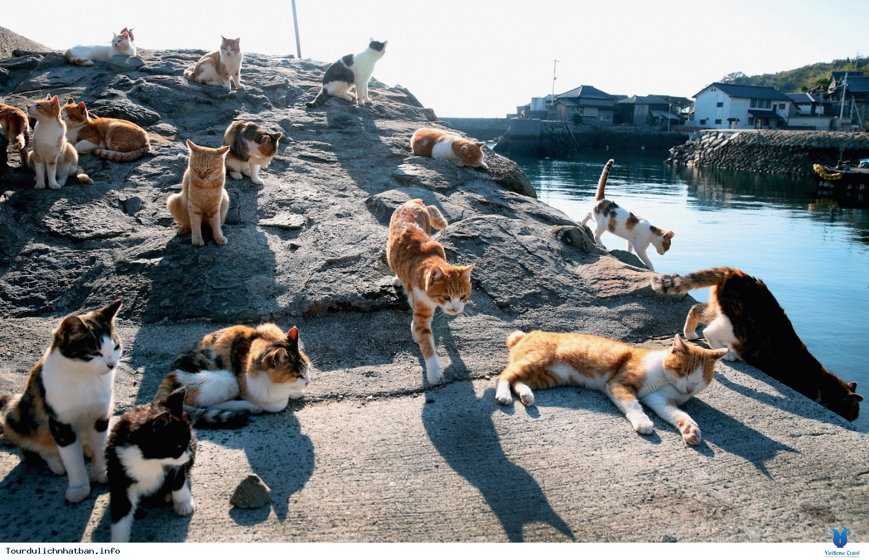 Yêu mèo hãy đến những nơi này ở Nhật Bản